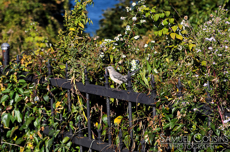 A bird on a wrought-iron fence at Fort Allen Park.