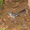 """<a href=""""http://xenogere.com/mockingbirds-take-2/"""" title=""""Mockingbirds take 2"""">Blog entry</a>"""