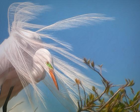 'Windy Style'