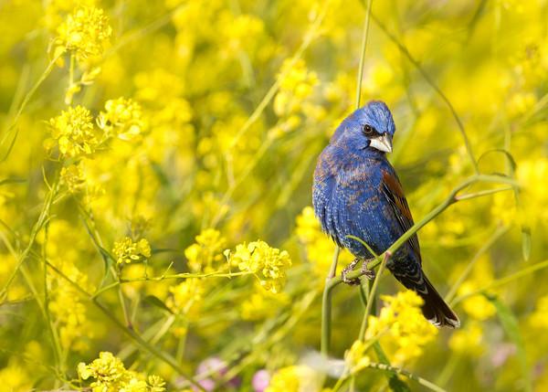 Birds, Birds & More Birds