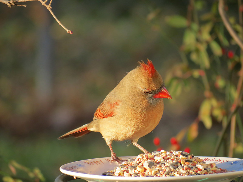 """""""Hmmm... which of these sunflower seeds do I want to try first?"""""""