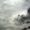 #33 Seagull 1
