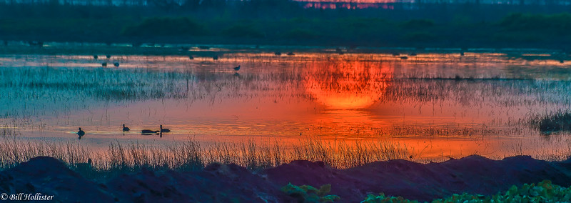 Sunset at Sandhill Crane Reserve in Central Valley 1-2012 #19 - Copy-2
