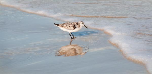Chasing Sea Foam