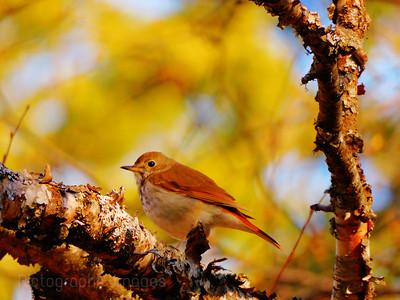 Bird On A Twig,