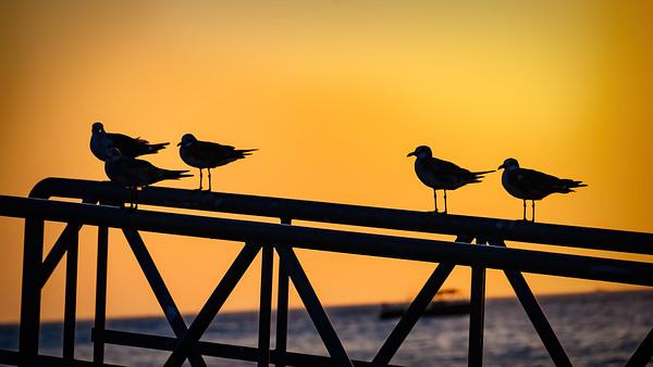 """Waiting on the Sunset'"