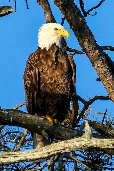 Eagle Eye 2