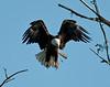 Birds :