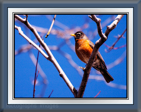 Boreal Forest, Bird Photography , Rictographs Images