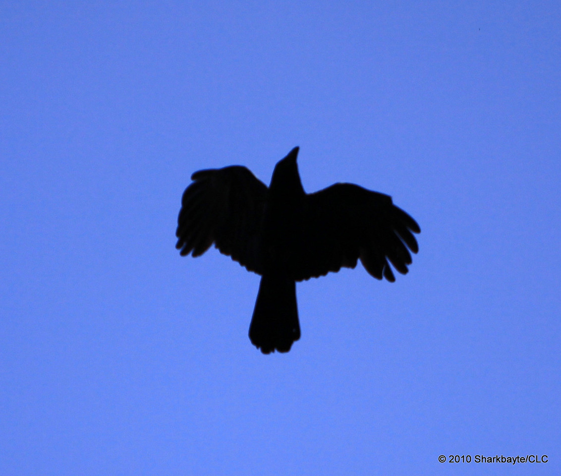 the Crow (first shot behind my head one handed)
