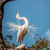 'Egret Dance'