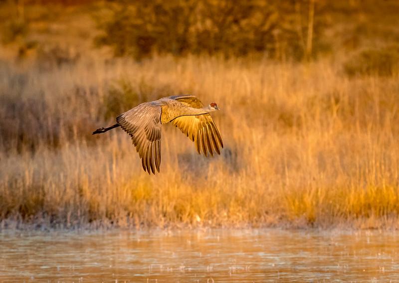 Golden Flight