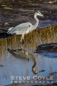 Heron Mirror
