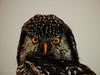 An Owl,