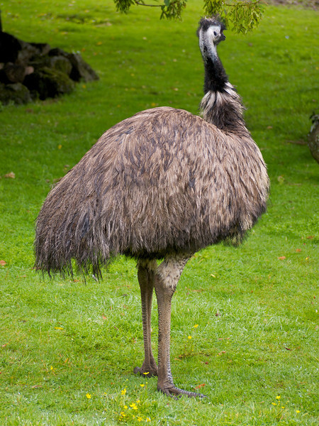 At the zoo, Auckland NZ