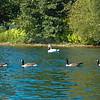 A White Swan Escort