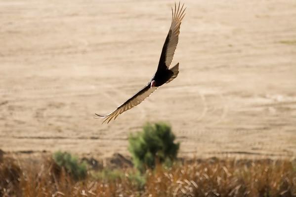 Bird-Cabo San Lucas