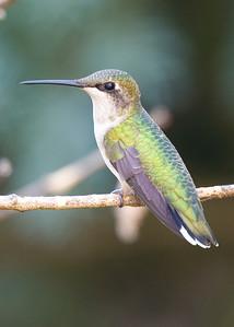 birds-56