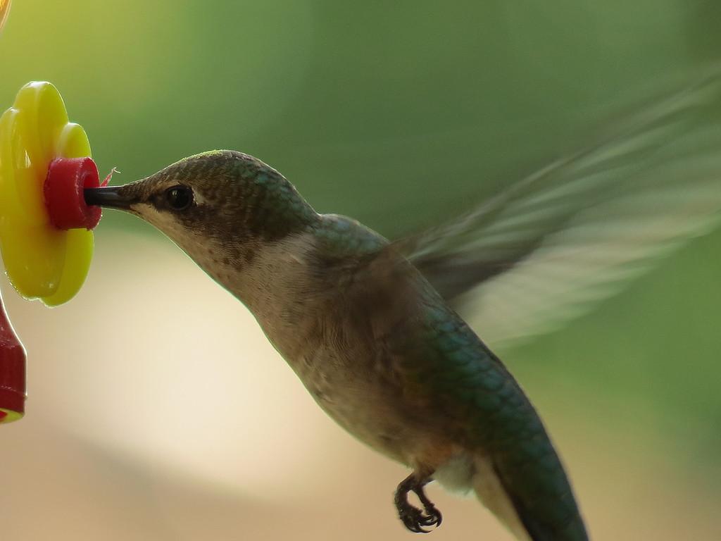 A tiny, tiny bird.