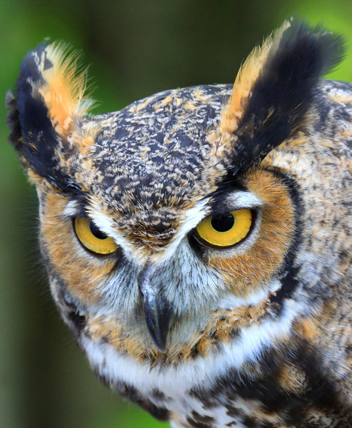 """""""Wise Old Owl"""""""