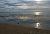 Morning, Delaware Bay shorebird migration 2012