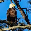 Eagle Eye 3