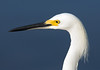 Snowy Egret, Merritt Island National Wildlife Refuge, Florida