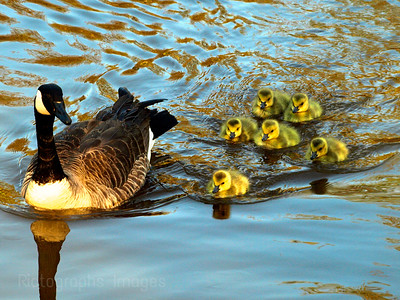 Art, Culture,  Mother Goose & Family