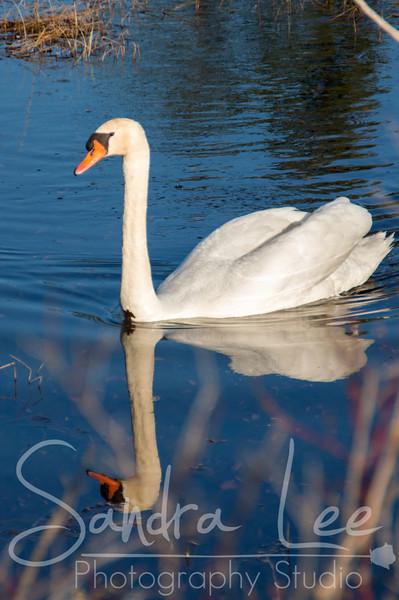 Birds by Petoskey Photographer, Sandra Lee<br /> <br /> Sandra Lee Photography Studio & Gallery<br /> 318 E Mitchell St<br /> Petoskey, Mi 49770<br /> 231-622-2066