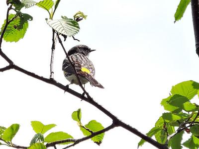 Bird On A Twg,