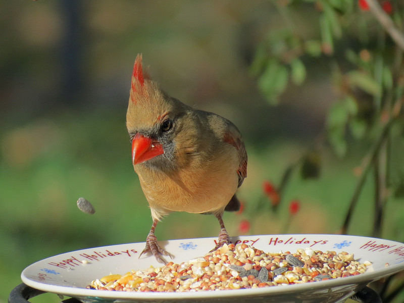 """""""I am levitating this sunflower seed with the power of my mind."""""""