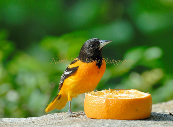 So orange!