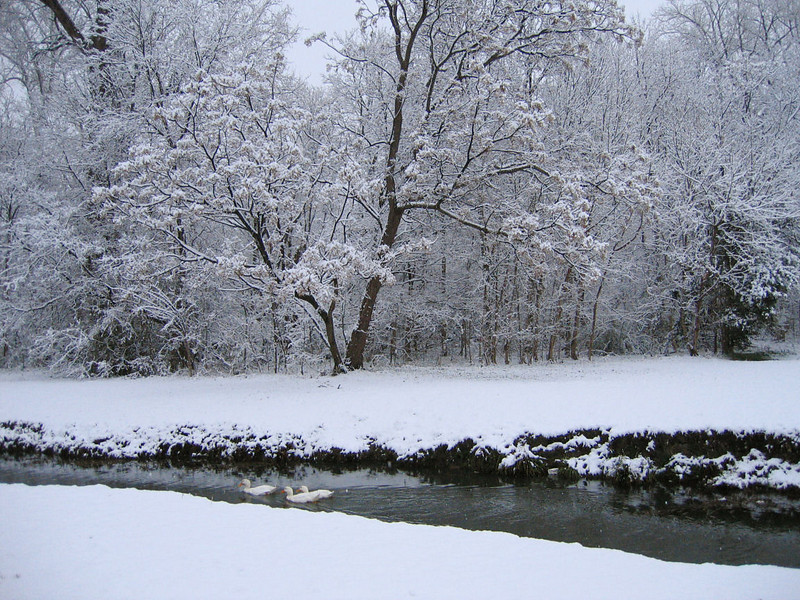 """<a href=""""http://xenogere.com/ducks-and-some-snow/"""" title=""""Ducks, and some snow"""">Blog entry</a>"""
