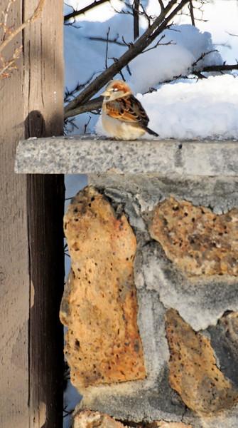 Baby Sparrow - Dec 4, 2010