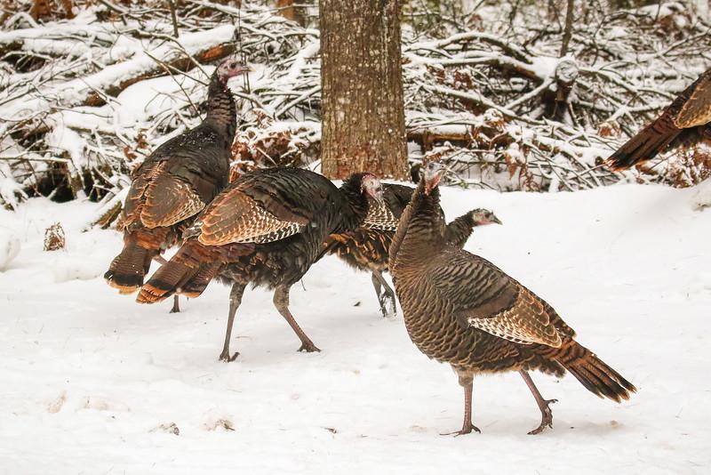 Turkey Walk   2