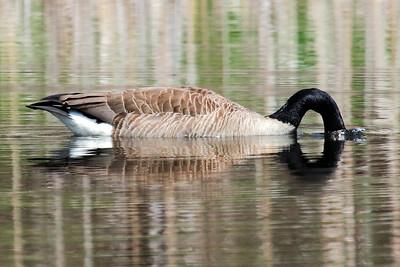 """Wild Goose Chase"""