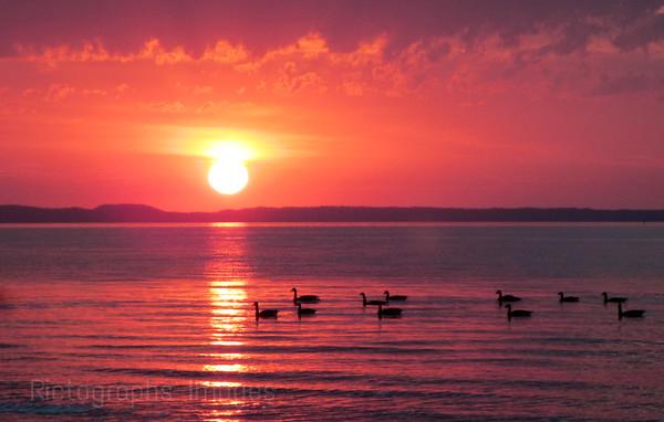 Birds On The Lake