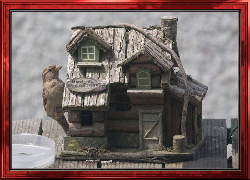 bird in his house