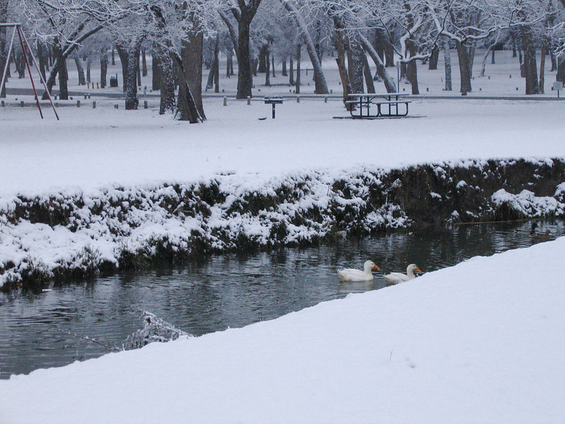 "<a href=""http://xenogere.com/ducks-and-some-snow/"" title=""Ducks, and some snow"">Blog entry</a>"