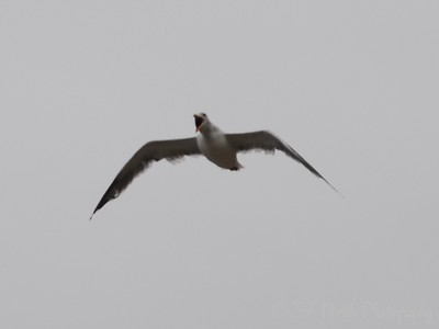 Gull Ecola State Park, Oregon