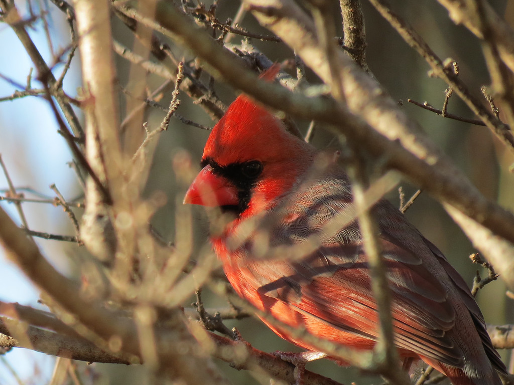 Red Bird on 12.12.12