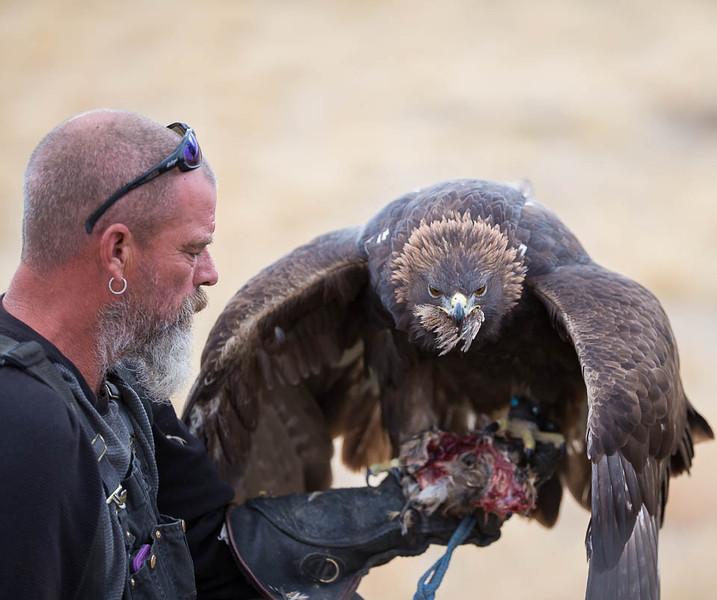 Golden Eagle, Blue Mountain Wildlife, Oregon