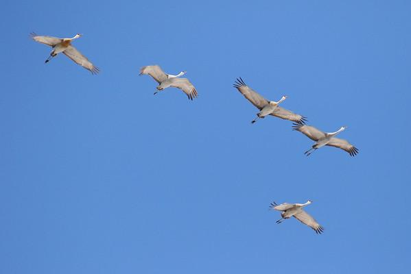 Flying Sandhills 1