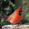 A very cold morning to be going outside -- 14 degrees last night -- but the light<br /> was good and I was able to get a few nice pictures of the birds.