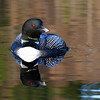 Loons 2014  (4)
