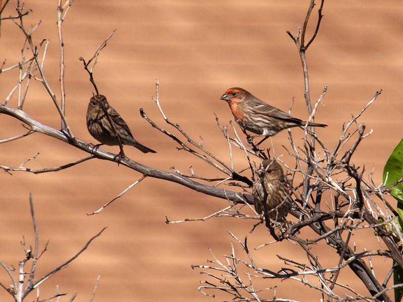 Birds - 28 Jan 2010