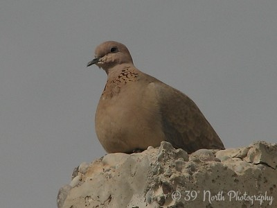 Dove Kirkuk, Iraq