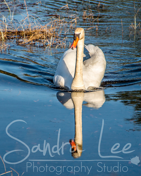 Birds by Petoskey Photographer, Sandra Lee<br /> <br /> Sandra Lee Photography Studio & Gallery<br /> 318 E Mitchell St<br /> Petoskey, Mi 49770<br /> 231-622-2066