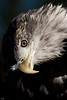 Bird of Prey taken in Portugul