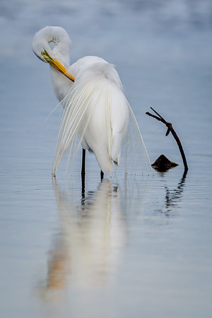 Soft Great Egret